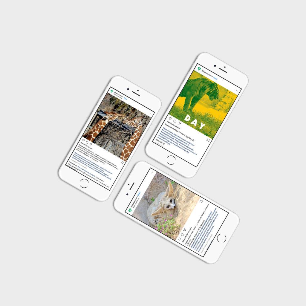 Bioparco di Roma - MOO Comunicazione - Social Media e Ads